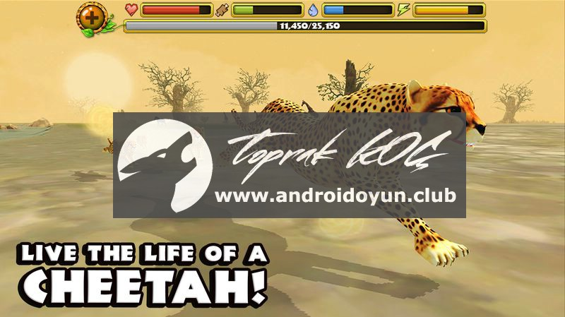 cheetah-simulator-1-1-full-apk