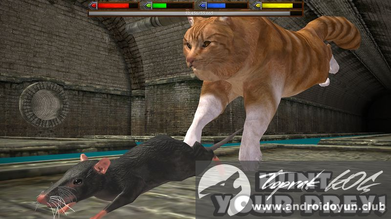 Cat And Rat Games Free Online